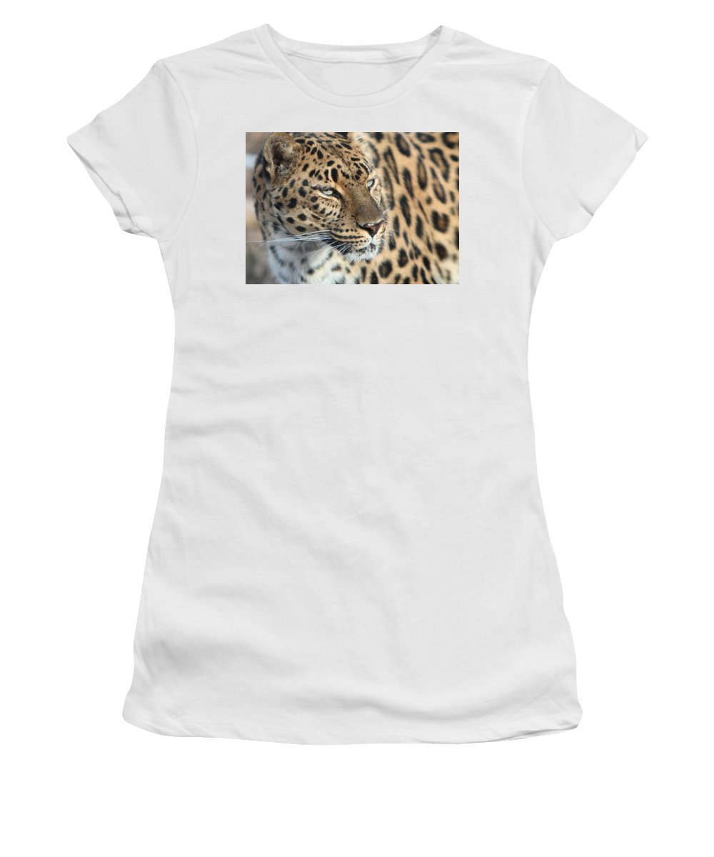 Amur Leapard Women's T-Shirt (Athletic Fit) featuring the photograph Amur Leopard by David Andersen
