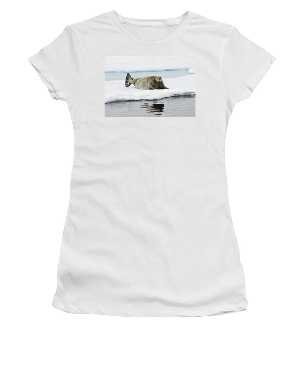Feb0514 Women's T-Shirt (Athletic Fit) featuring the photograph Bearded Seal On Ice Floe Norway by Konrad Wothe
