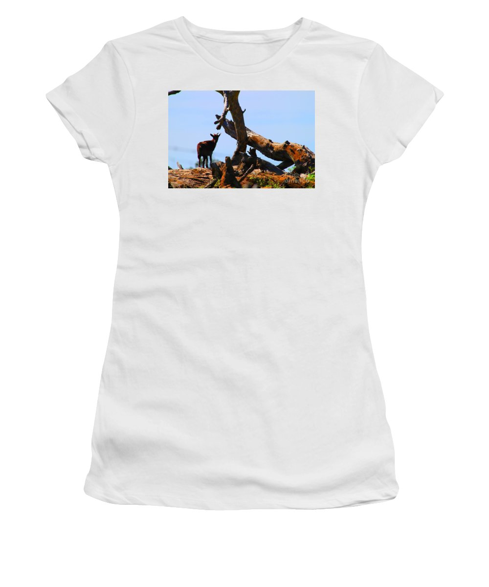 Upcountry Maui Women's T-Shirt featuring the photograph Billy The Goat by Pharaoh Martin