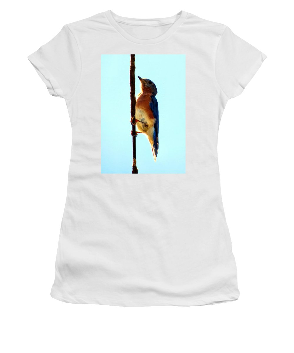 Bluebird Women's T-Shirt featuring the photograph Bluebird Hangin by Art Dingo