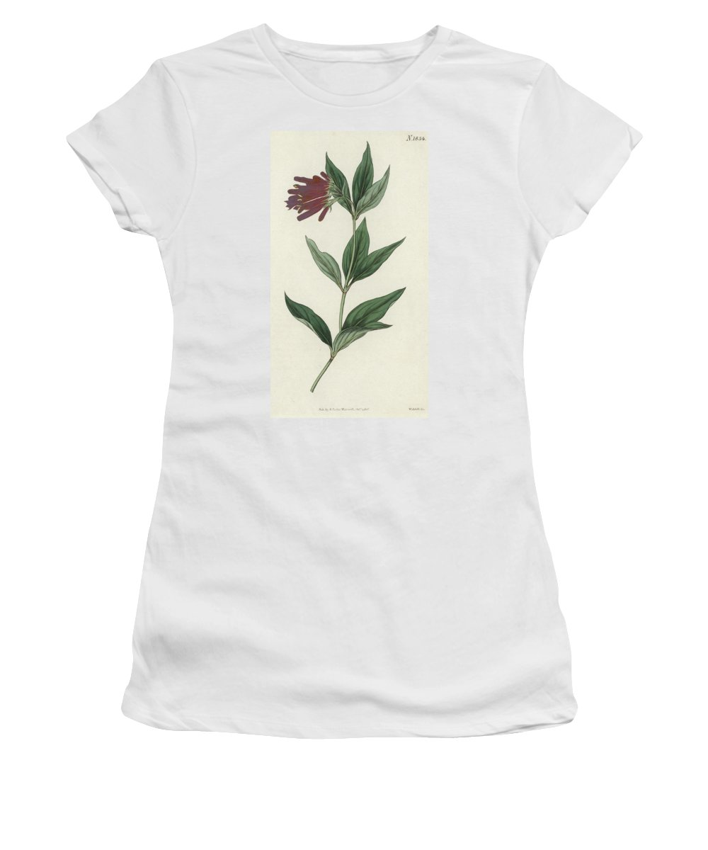 Botany Women's T-Shirt (Athletic Fit) featuring the painting Botanical Engraving by English School