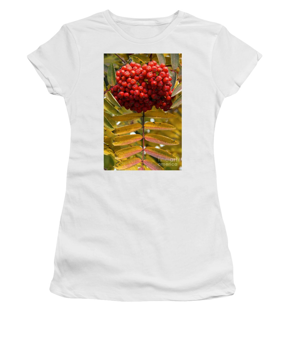 Canmore Canada Tree Trees Fall Color Autumn Colors Leaf Leaves Buffalo Berry Berries Fruit Fruits Women's T-Shirt (Athletic Fit) featuring the photograph Buffalo Berries by Bob Phillips