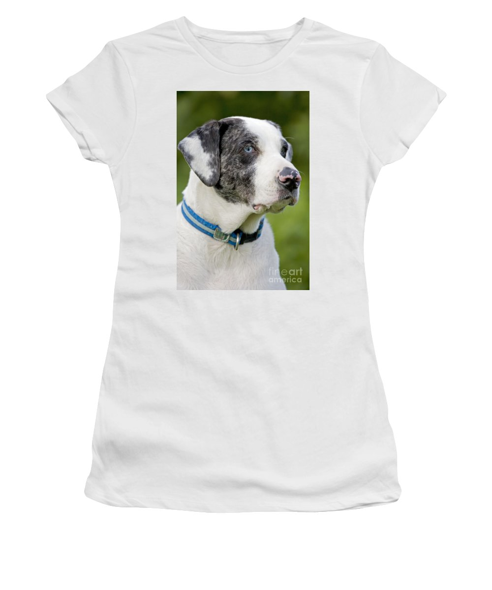 Catahoula Leopard Dog Women's T-Shirt (Athletic Fit) featuring the photograph Catahoula Leopard Dog by John Cancalosi