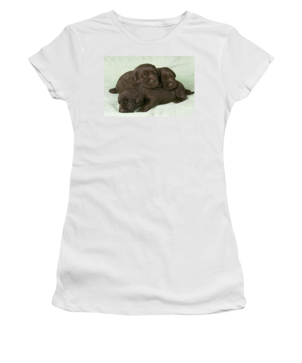 Labrador Retriever Women's T-Shirt (Athletic Fit) featuring the photograph Chocolate Labrador Puppies by Jean-Michel Labat