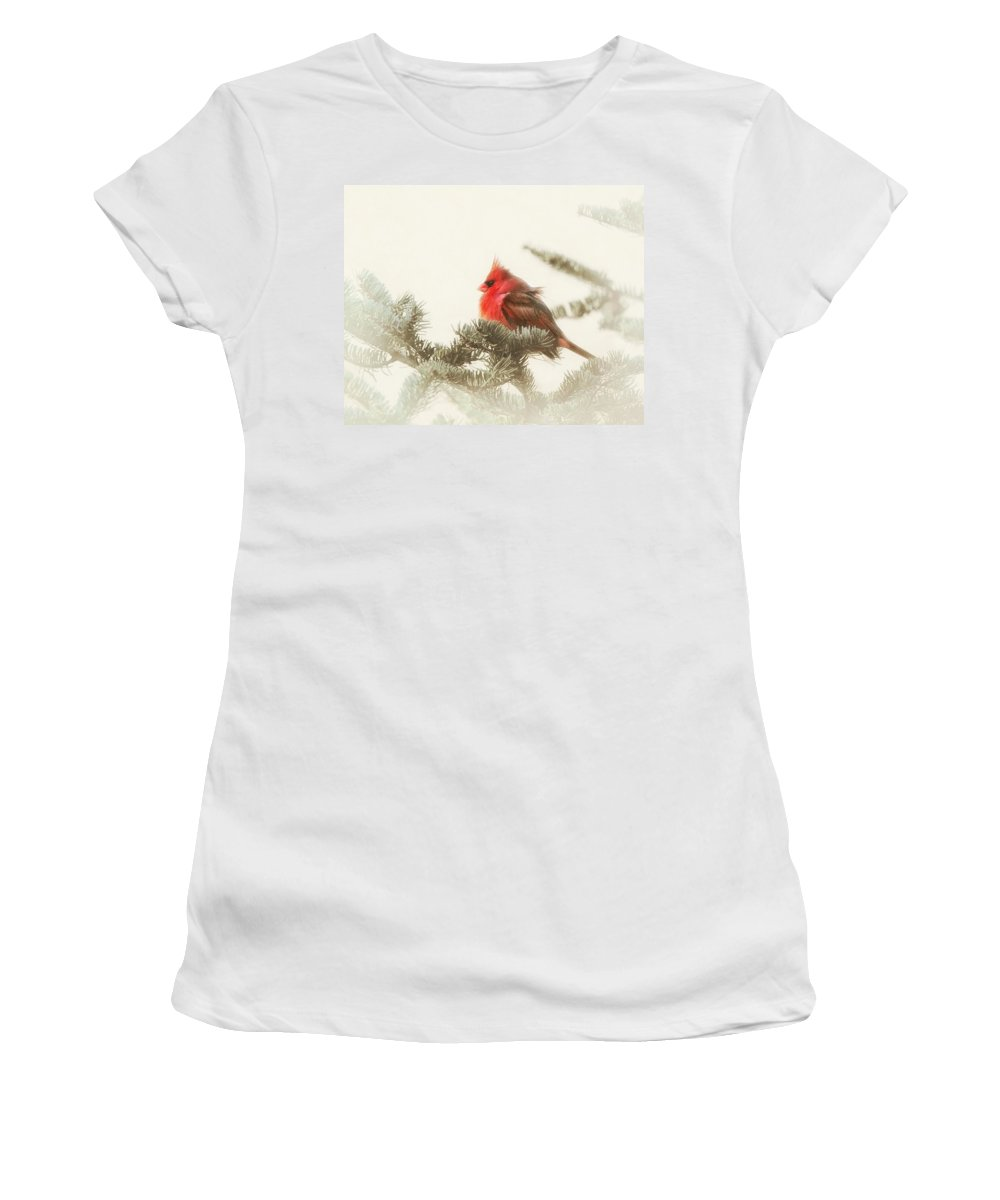 Cardinal Women's T-Shirt (Athletic Fit) featuring the photograph Christmas Cardinal by Susan Capuano