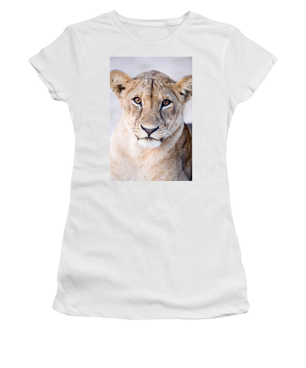 Photography Women's T-Shirt featuring the photograph Close-up Of A Lioness Panthera Leo by Panoramic Images