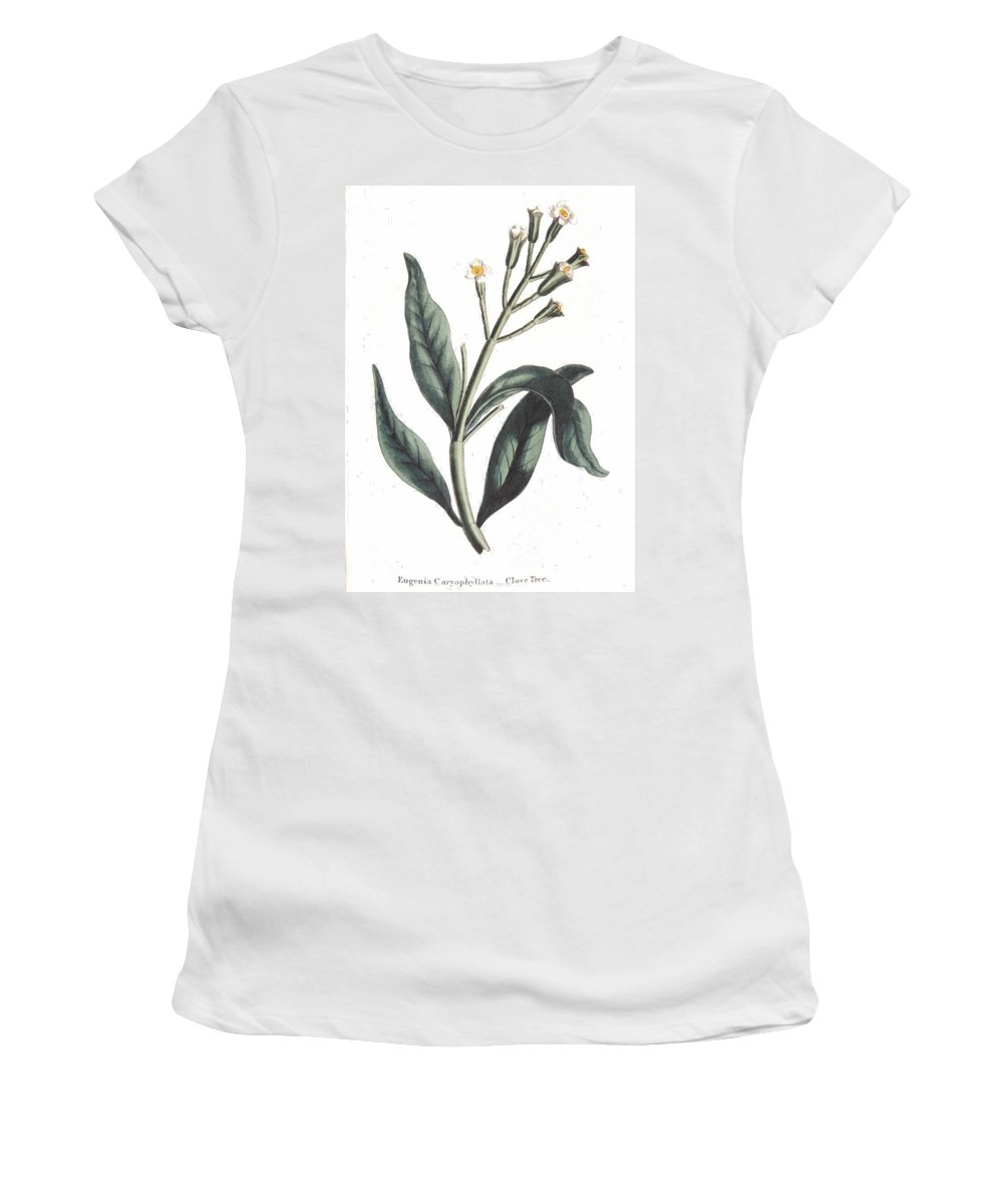 Clove Women's T-Shirt (Athletic Fit) featuring the painting Clove Eugenia Aromatica by Anonymous