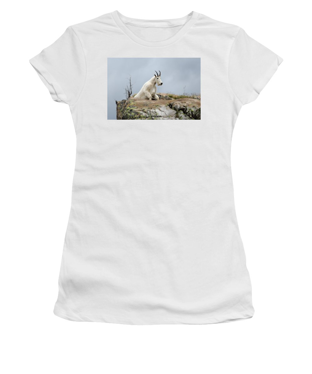 Mountain Goat Women's T-Shirt (Athletic Fit) featuring the photograph Coming Up by David Andersen