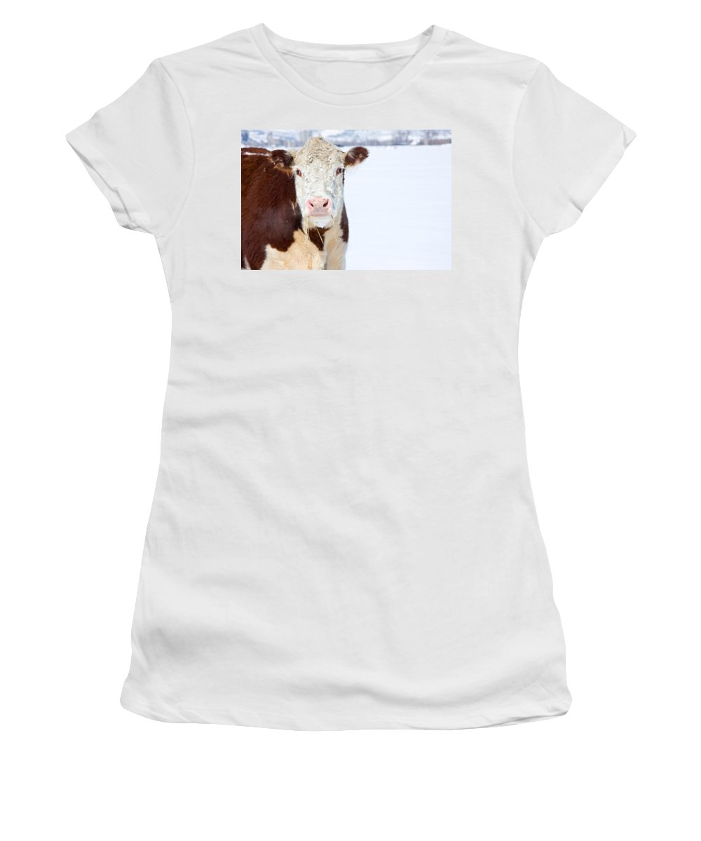 Cow Women's T-Shirt (Athletic Fit) featuring the photograph Cow - Fine Art Photography Print by James BO Insogna