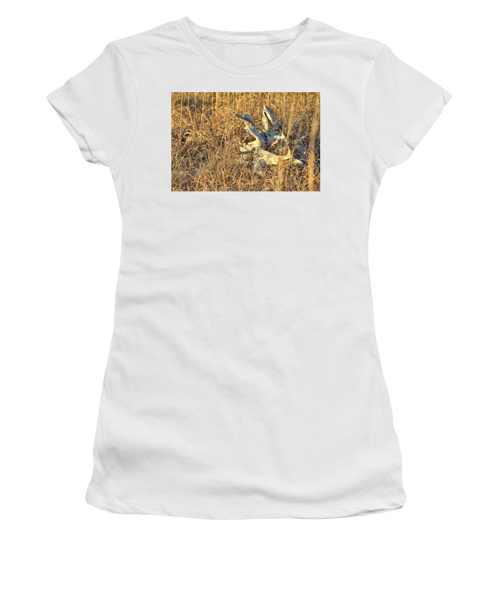 9685 Women's T-Shirt (Athletic Fit) featuring the photograph Driftwood by Gordon Elwell