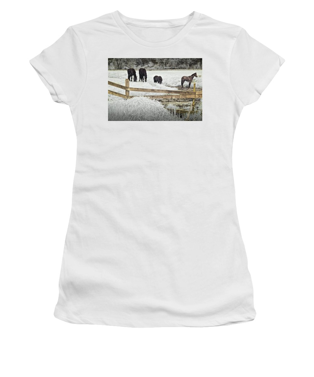 Art Women's T-Shirt featuring the photograph Dutch Friesian Horses Behind A Wooden Fence In A Pasture by Randall Nyhof