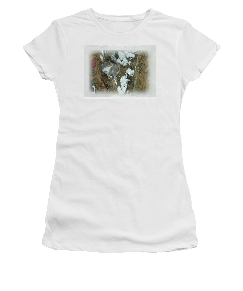 Squirrel Women's T-Shirt (Athletic Fit) featuring the photograph Eastern Gray Squirrel - Sciurus Carolinensis by Mother Nature