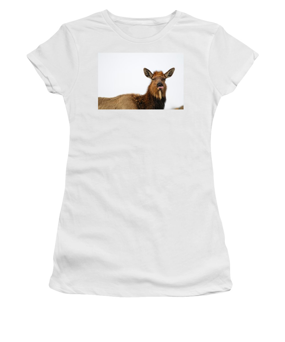 Alberta Women's T-Shirt (Athletic Fit) featuring the photograph Elk by Brandon Smith