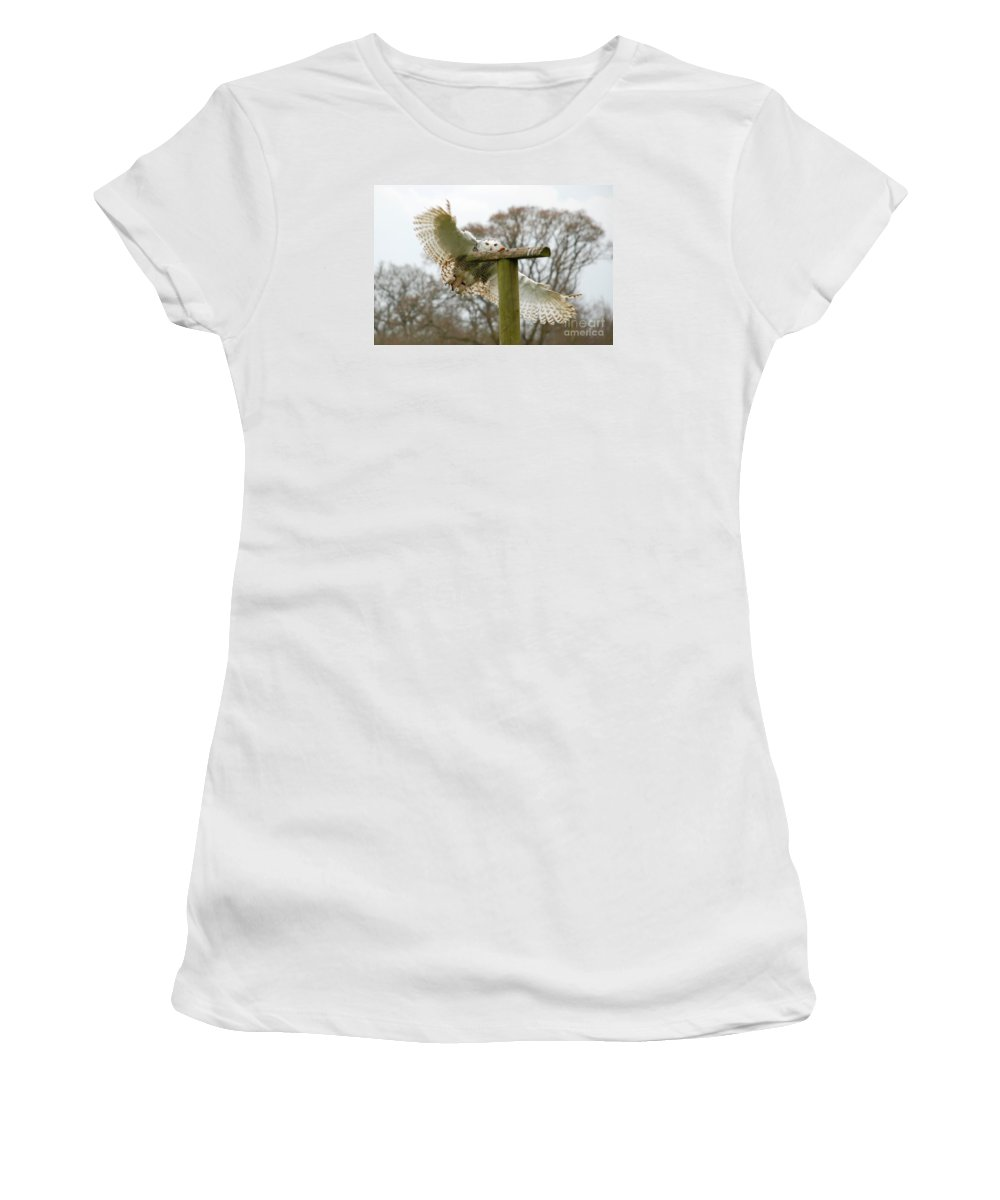 Snowy Owl Swooping Cotswold Falconry Centre Perch Focus Women's T-Shirt featuring the photograph Eyes On The Prize by Richard Gibb