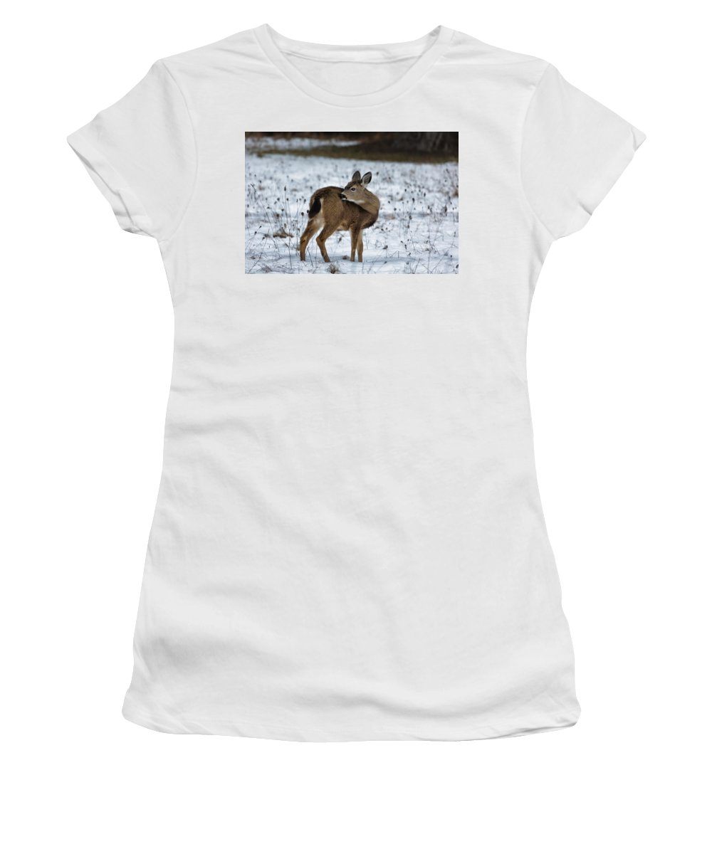 Fawn Women's T-Shirt (Athletic Fit) featuring the photograph First Winter by Belinda Greb