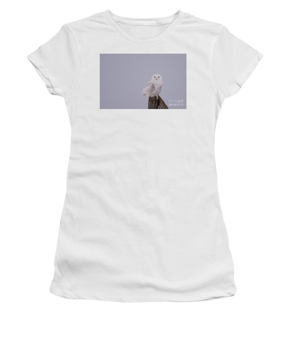 Field Women's T-Shirt (Athletic Fit) featuring the photograph Gorgeous Bird by Cheryl Baxter