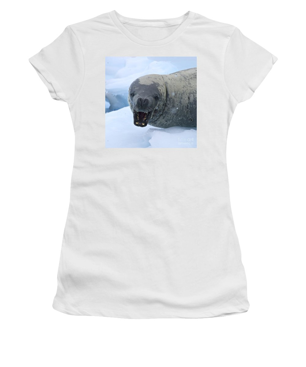 Festblues Women's T-Shirt featuring the photograph Greetings From Antarctica.. by Nina Stavlund