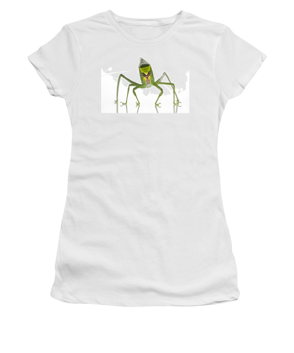 Feb0514 Women's T-Shirt (Athletic Fit) featuring the photograph Katydid Suriname by Piotr Naskrecki