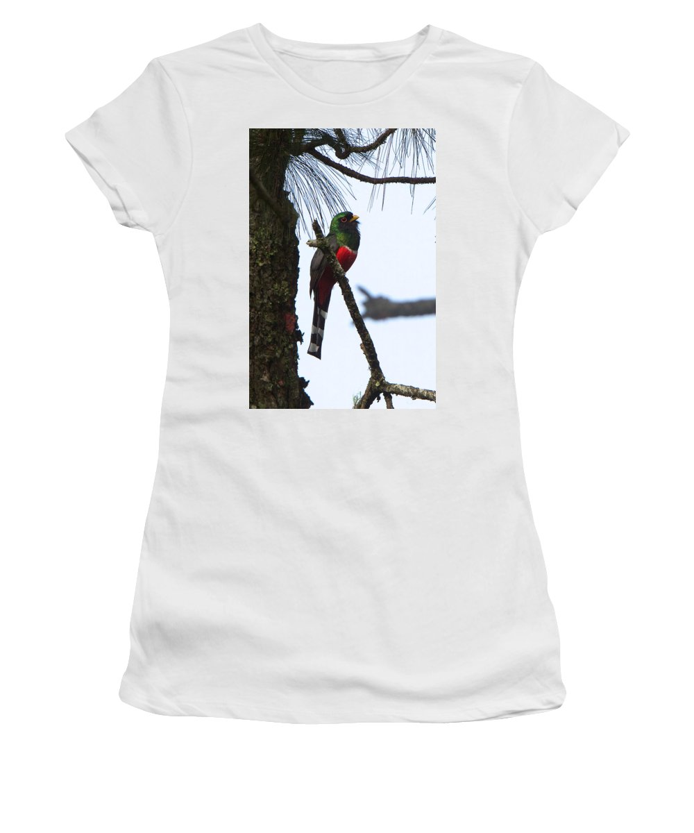 Honduras Women's T-Shirt featuring the photograph Las Trancas Mountain Trogon by David Beebe