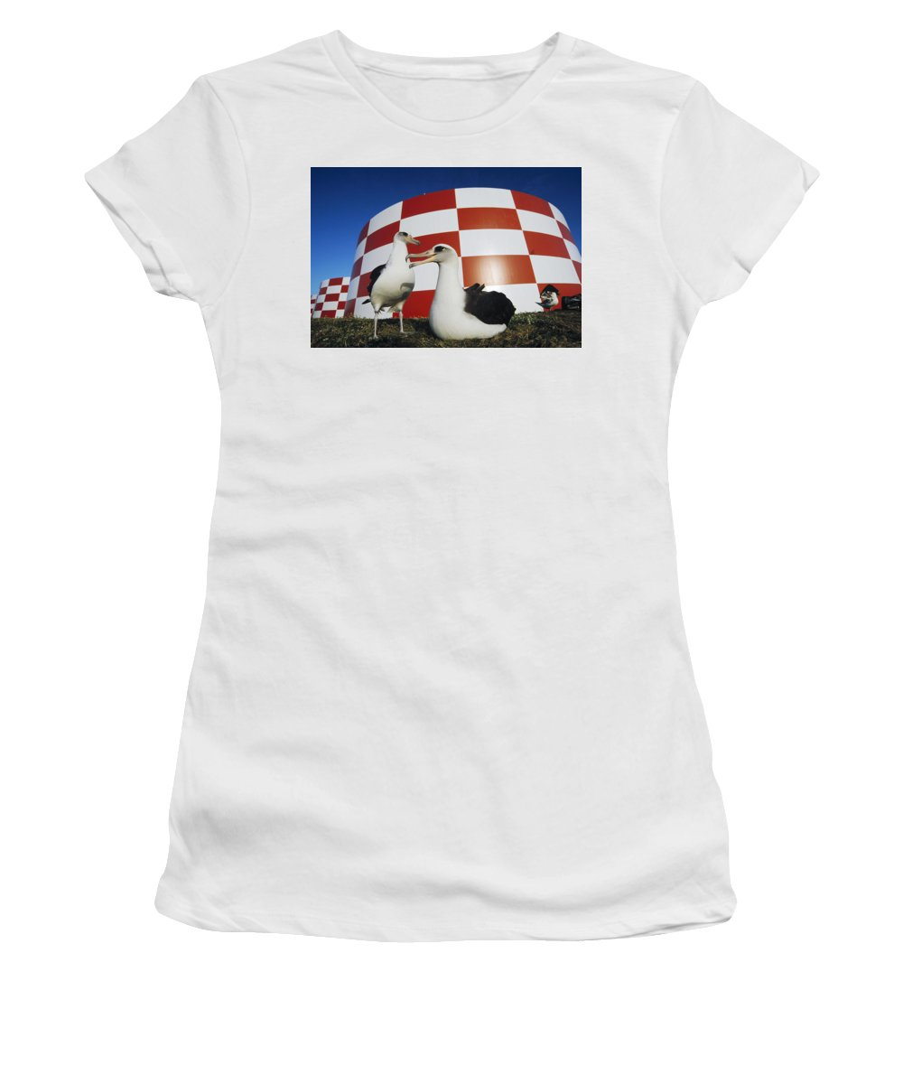 Feb0514 Women's T-Shirt (Athletic Fit) featuring the photograph Laysan Albatross Pair Nesting Midway by Tui De Roy