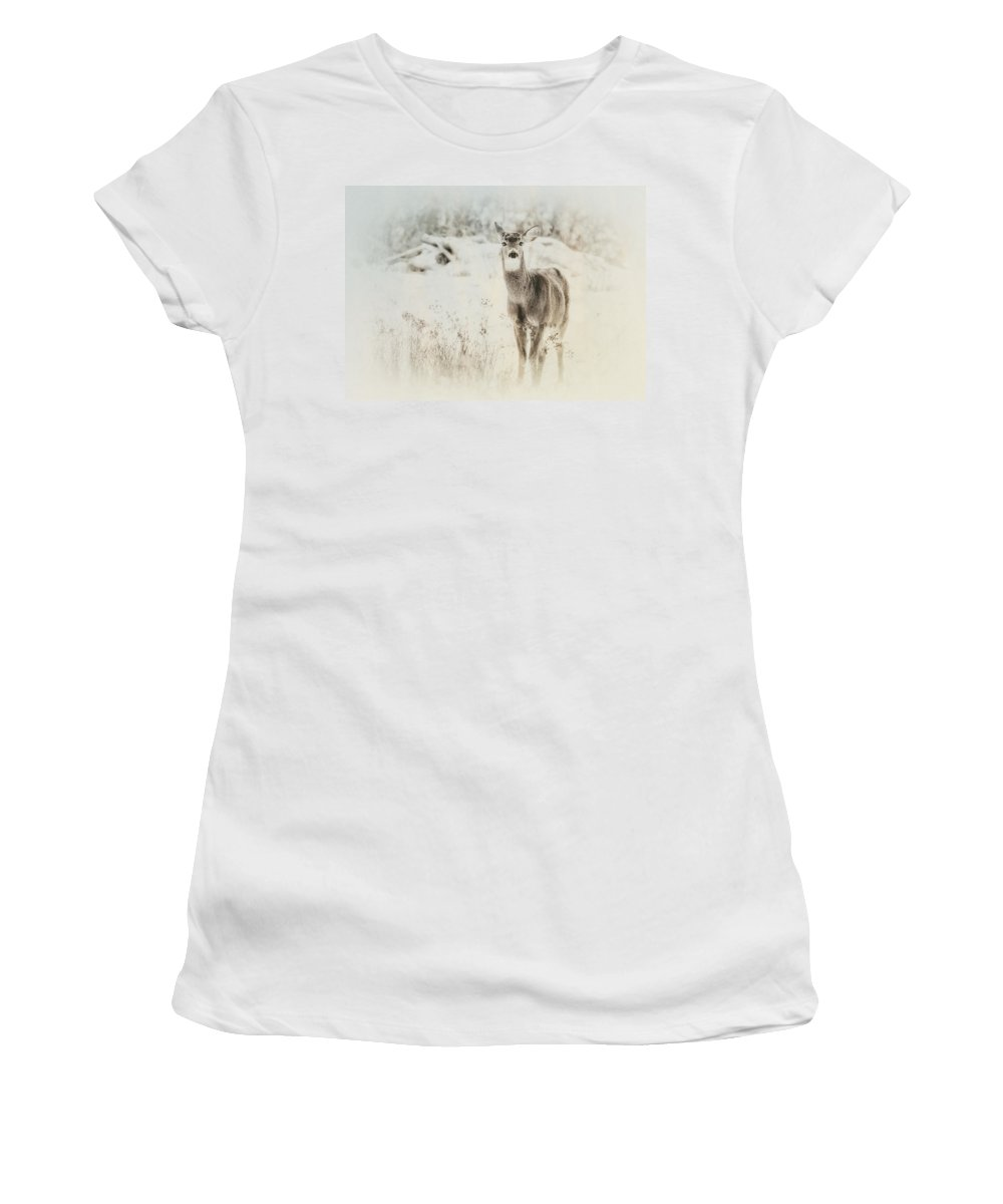Deer Women's T-Shirt (Athletic Fit) featuring the photograph Listen by Susan Capuano