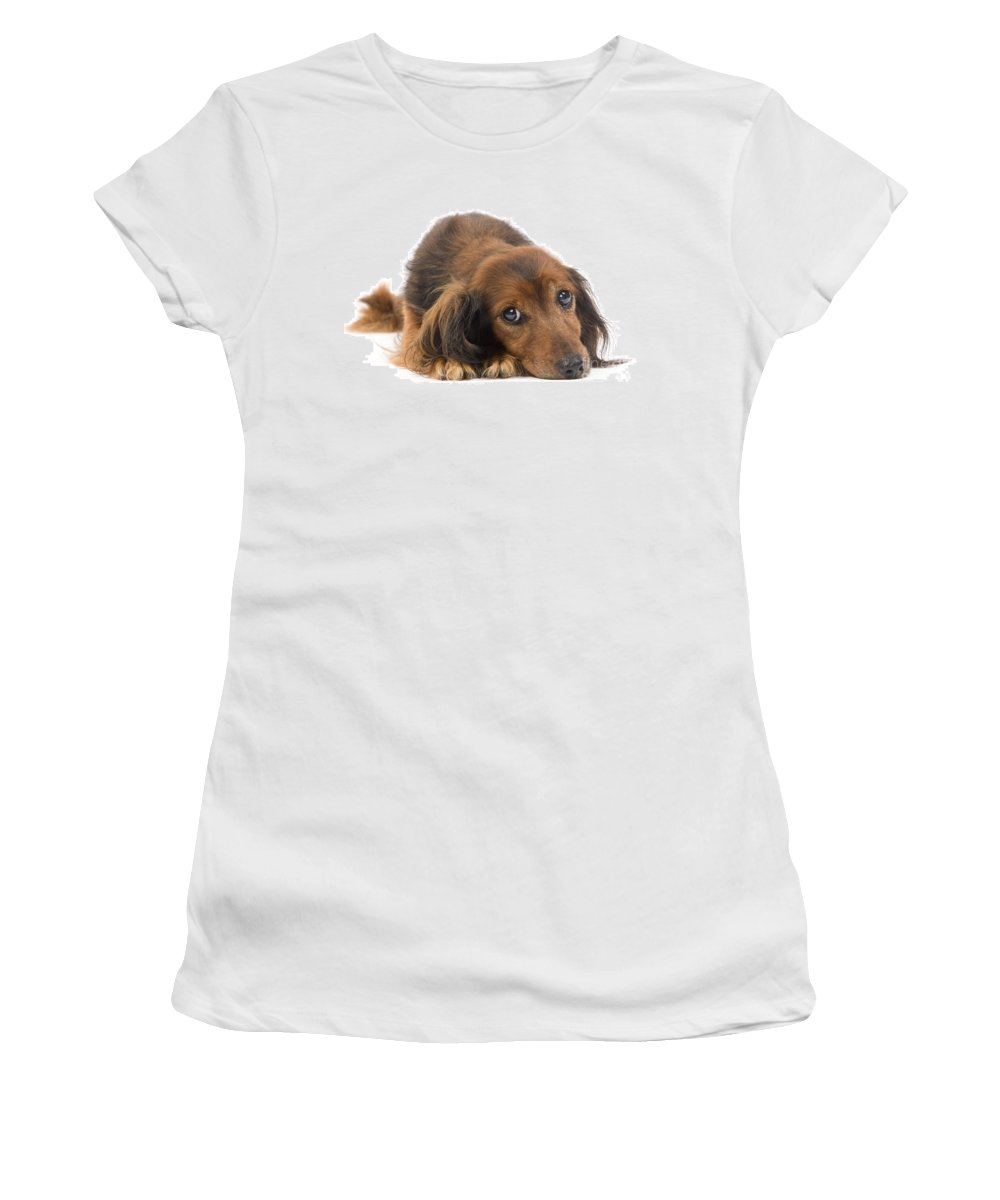 Long-haired Dachshund Women's T-Shirt (Athletic Fit) featuring the photograph Long-haired Dachshund by Jean-Michel Labat