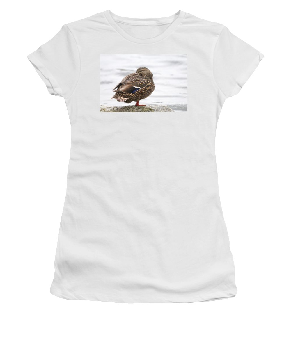 Mallard Women's T-Shirt (Athletic Fit) featuring the photograph Mallard In The Rain by Sharon Talson