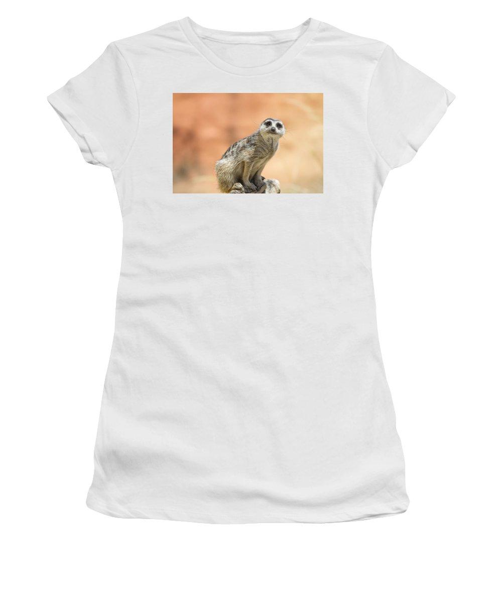 Meerkat Women's T-Shirt (Athletic Fit) featuring the photograph Meerkat Manor V3 by Douglas Barnard