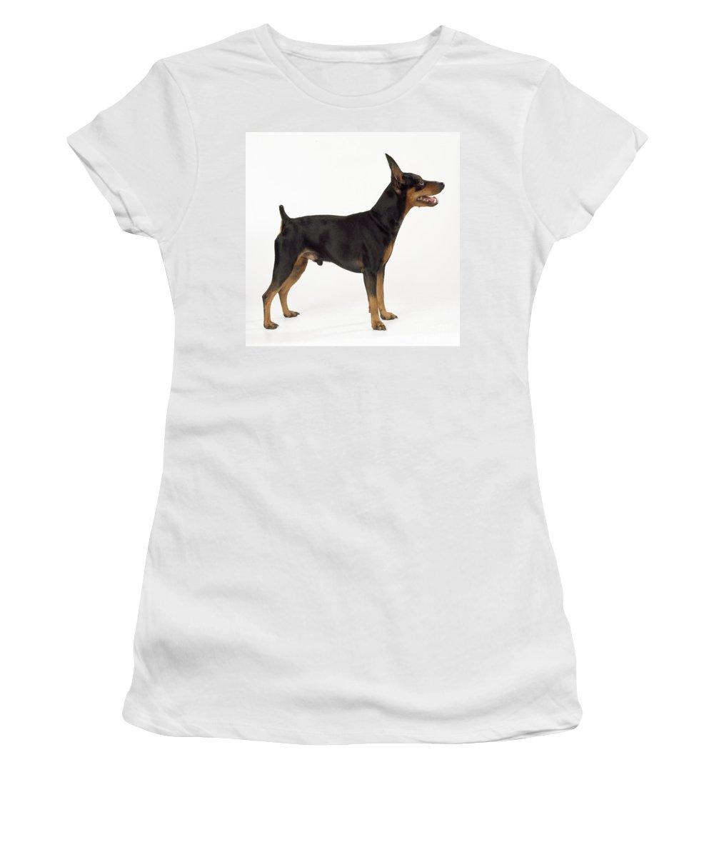Miniature Pinscher Women's T-Shirt (Athletic Fit) featuring the photograph Miniature Pinscher by John Daniels