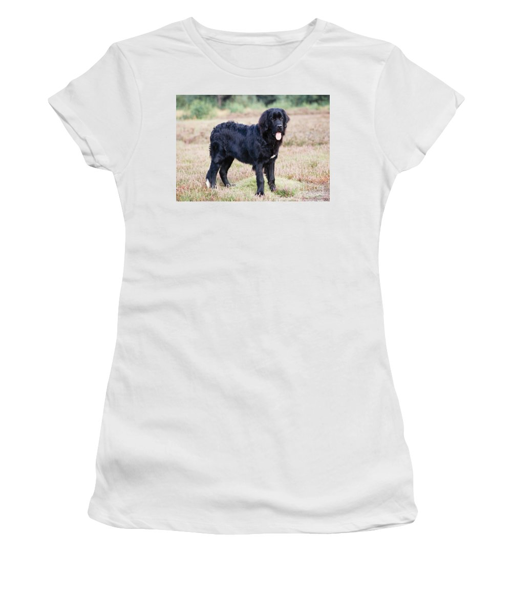 Newfoundland Women's T-Shirt (Athletic Fit) featuring the photograph Newfoundland Dog by John Daniels