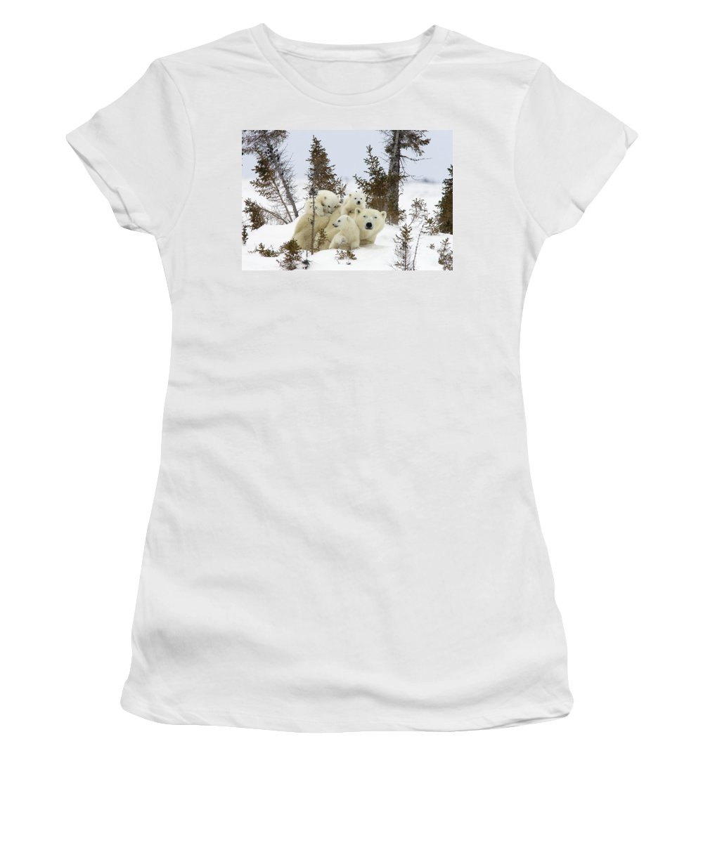 00601007 Women's T-Shirt featuring the photograph Polar Bear Ursus Maritimus Mother And Cubs by Matthias Breiter