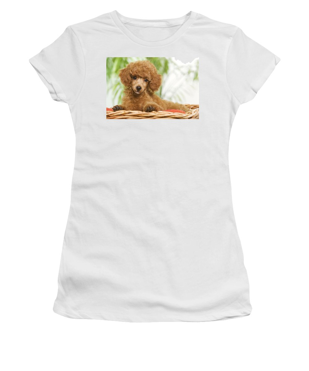 Poodle Women's T-Shirt (Athletic Fit) featuring the photograph Poodle by Jean-Michel Labat