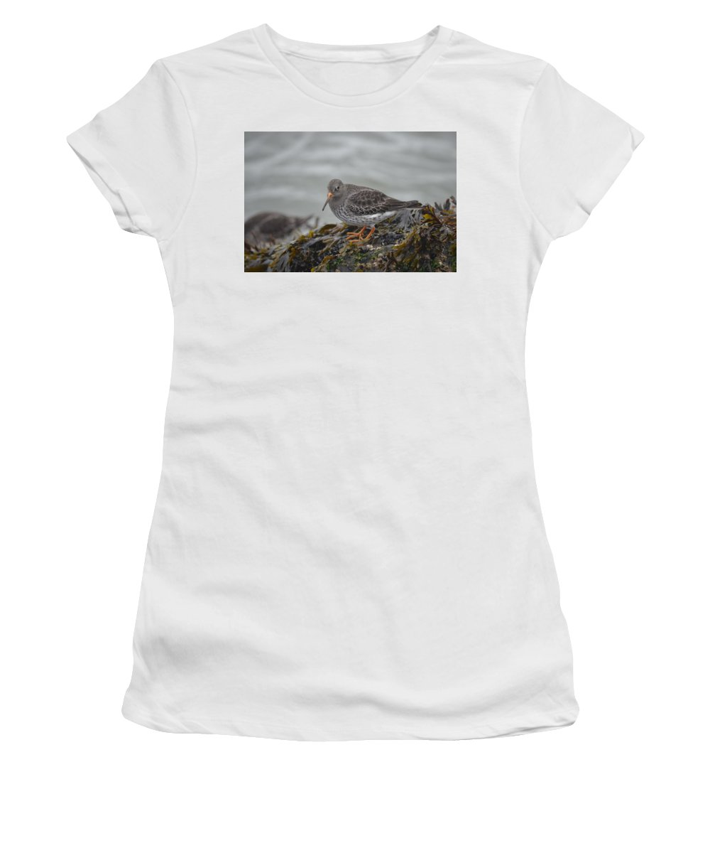 Purple Sandpiper Women's T-Shirt (Athletic Fit) featuring the photograph Purple Sandpiper 2 by James Petersen