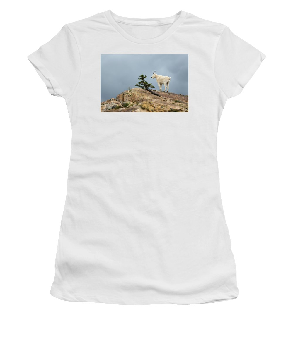 Mountain Goat Women's T-Shirt (Athletic Fit) featuring the photograph She Goat by David Andersen