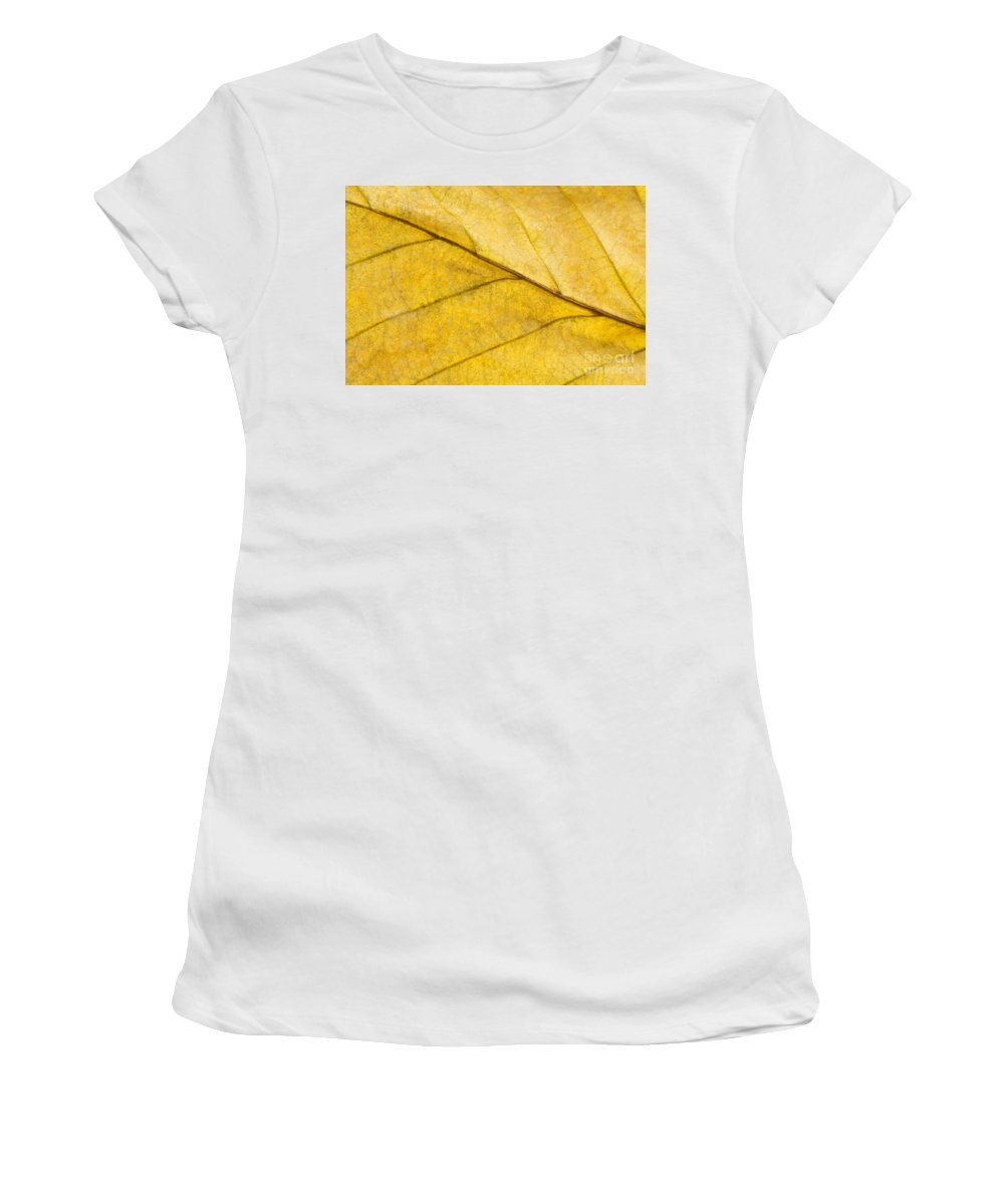 Annegilbert Women's T-Shirt (Athletic Fit) featuring the photograph Simply Beech by Anne Gilbert