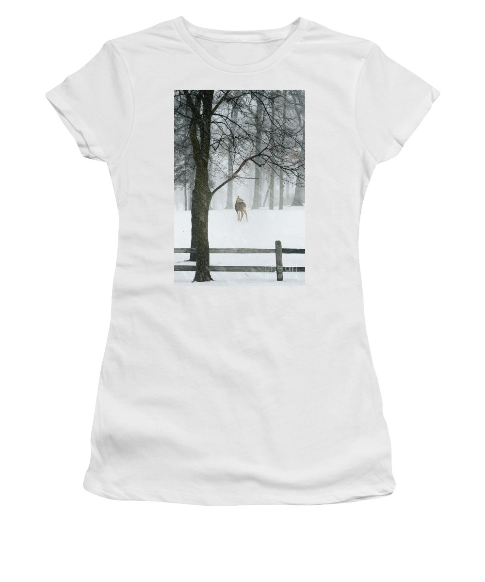 Animal Women's T-Shirt featuring the photograph Snowy Deer by Margie Hurwich