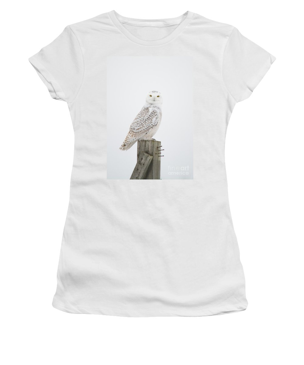 Field Women's T-Shirt (Athletic Fit) featuring the photograph Snowy Perched Profile by Cheryl Baxter