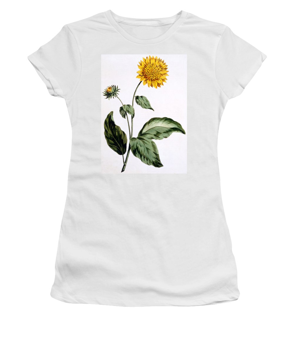 Still-life Women's T-Shirt featuring the painting Sunflower by John Edwards