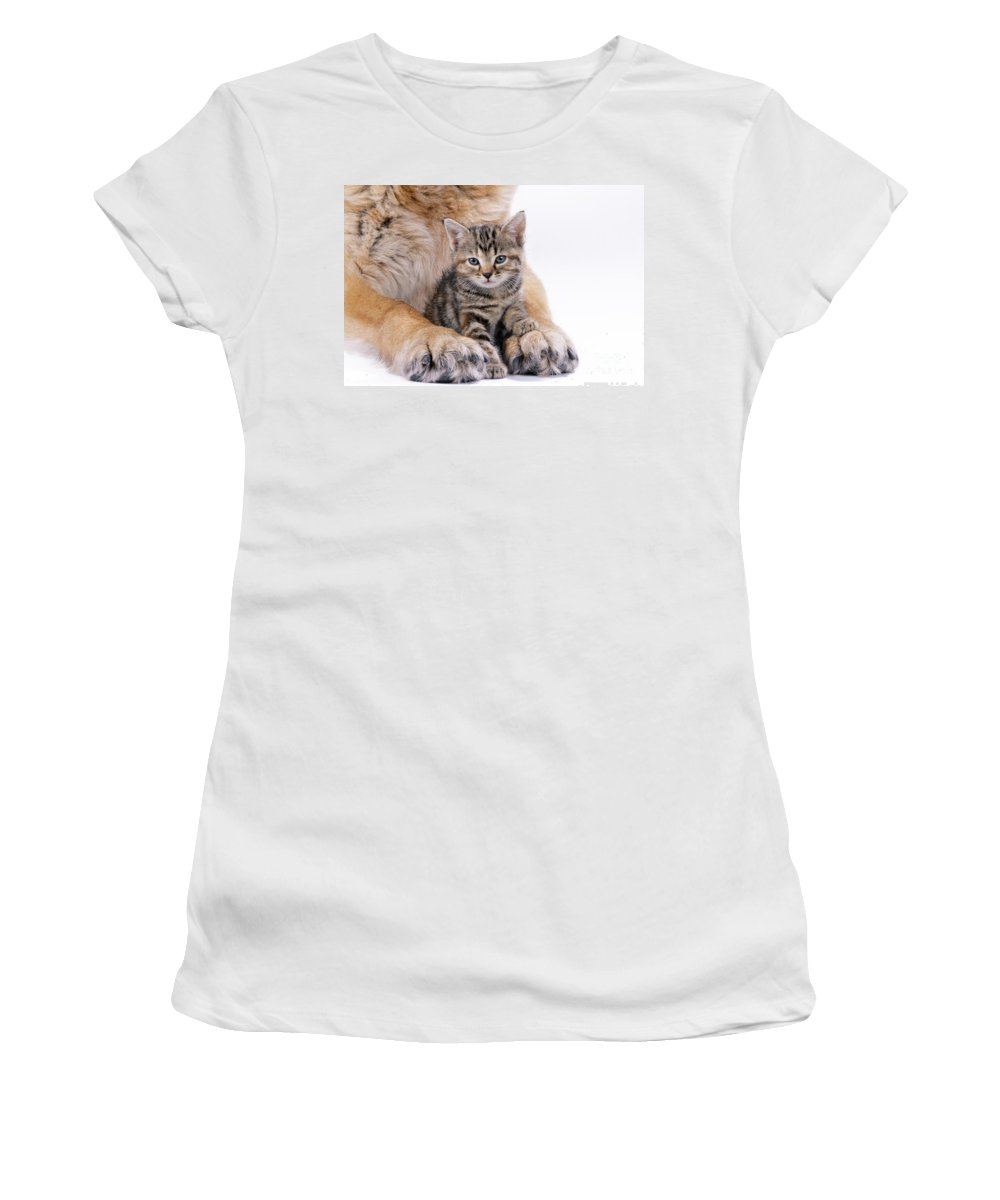 Cat Women's T-Shirt (Athletic Fit) featuring the photograph Tabby Kitten Between Large Dogs Paws by John Daniels