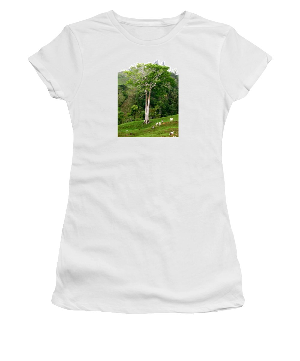 Tree Women's T-Shirt (Athletic Fit) featuring the photograph The Sable by Hilari Alsip