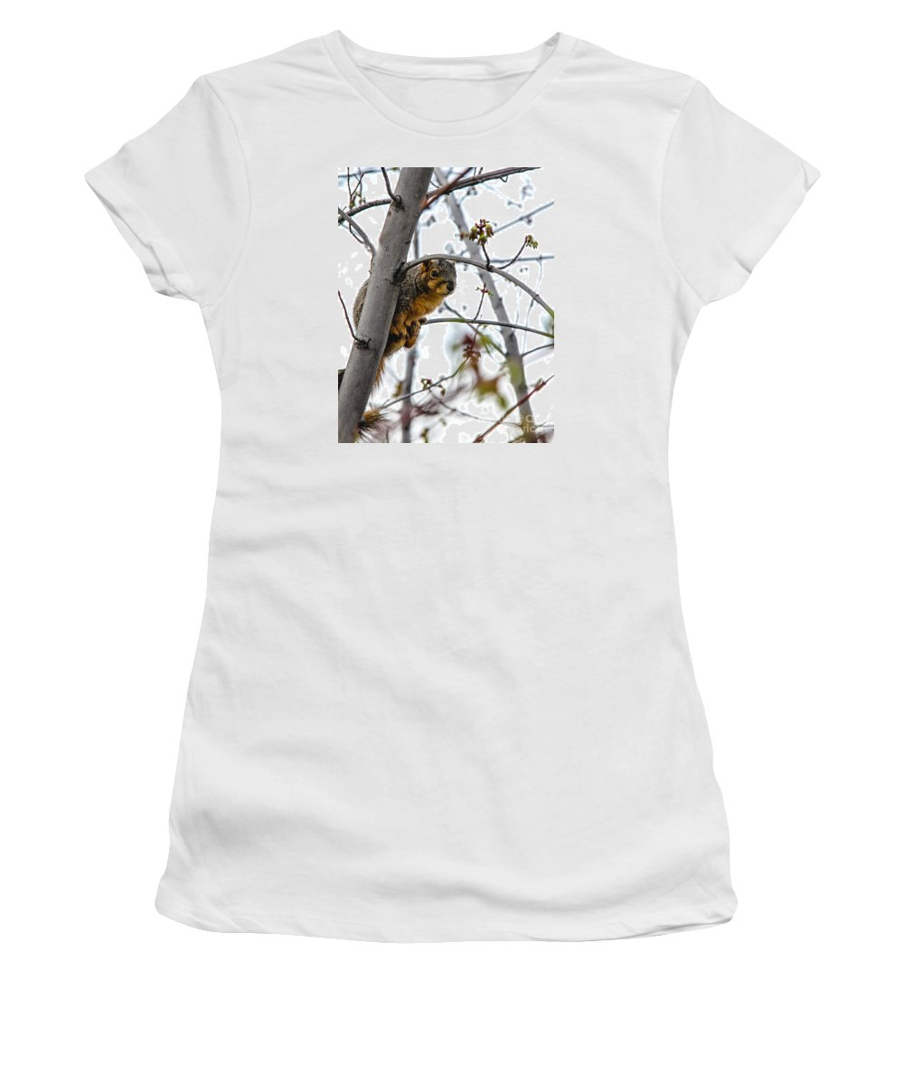 Squirrel Women's T-Shirt (Athletic Fit) featuring the photograph Up The Tree by Robert Bales