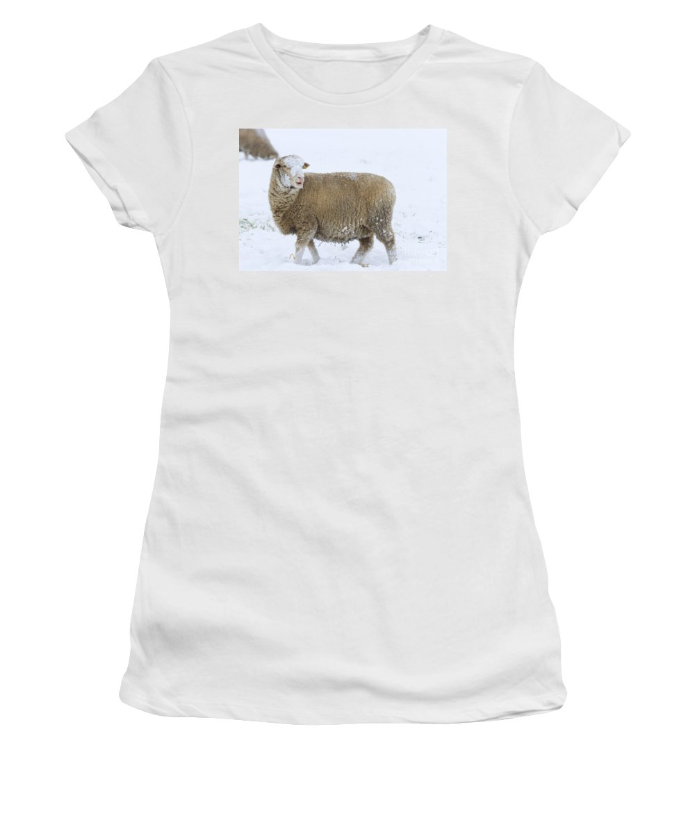 Sheep Women's T-Shirt (Athletic Fit) featuring the photograph Who Threw The Snowball by Mike Dawson