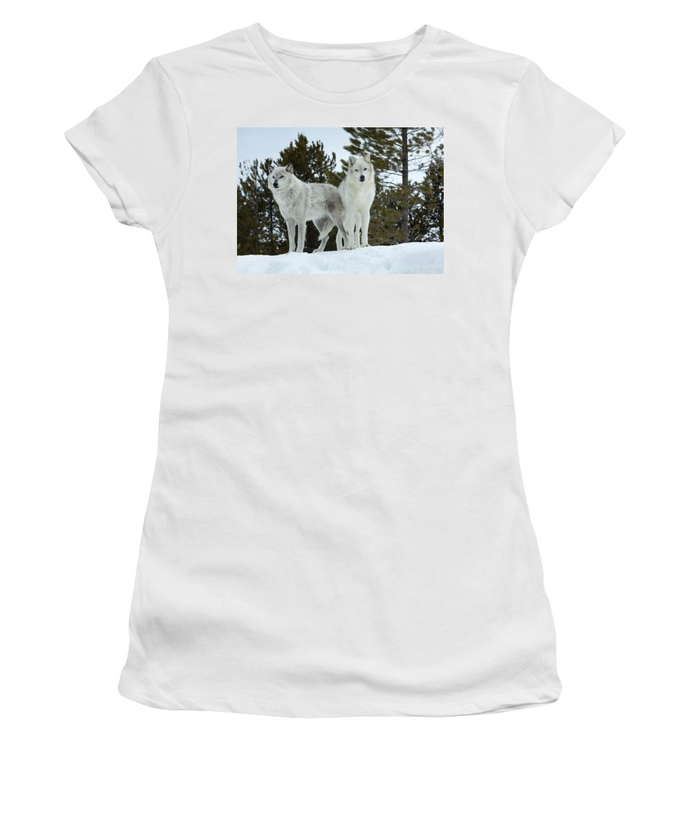 Wolf Women's T-Shirt featuring the photograph Wolves - Partners by Fran Riley