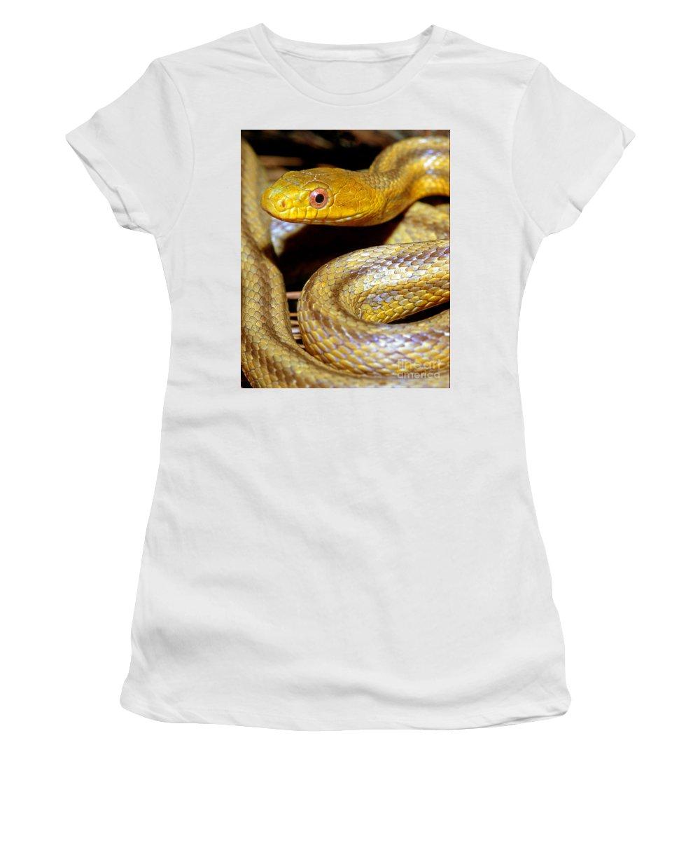 Yellow Rat Snake Women's T-Shirt featuring the photograph Yellow Rat Snake by Millard H. Sharp