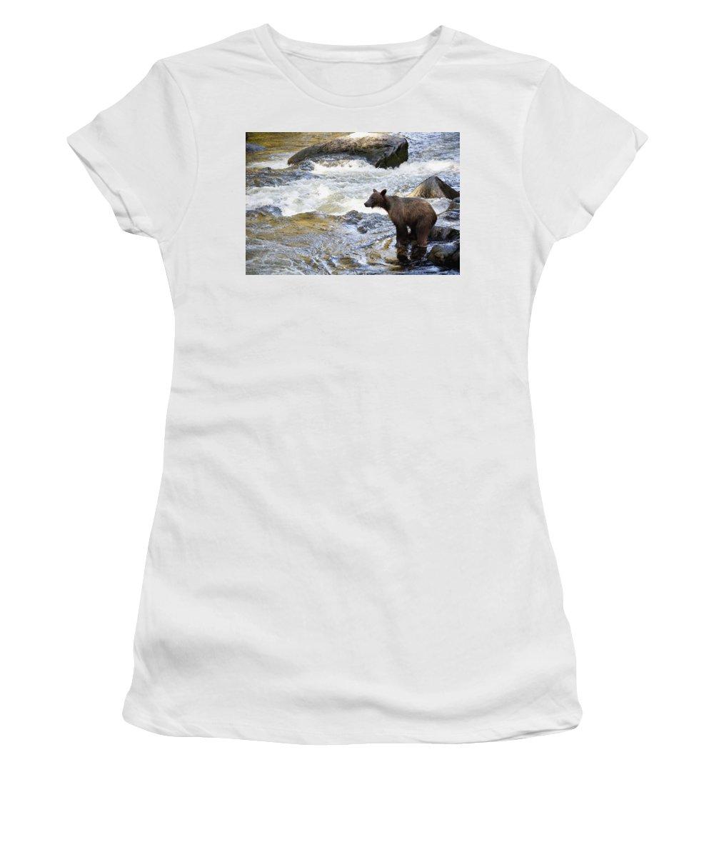 Mp Women's T-Shirt featuring the photograph Grizzly Bear Ursus Arctos Horribilis by Matthias Breiter