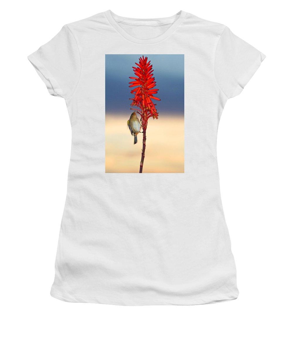 Bird Women's T-Shirt featuring the photograph Atlantic Canary by Ralf Kaiser