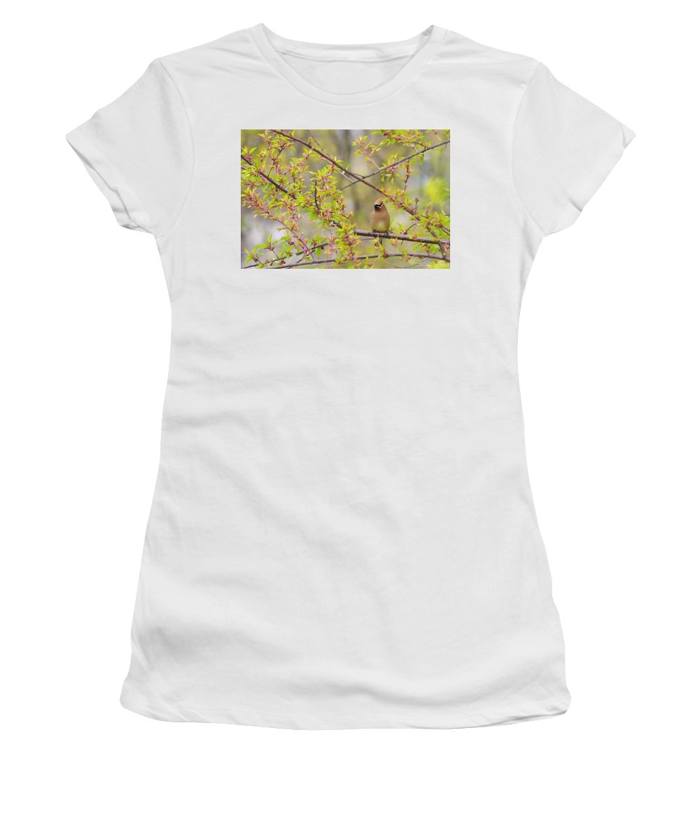 Cedar Waxwing Women's T-Shirt (Athletic Fit) featuring the photograph Cedar Waxwing by Terry DeLuco