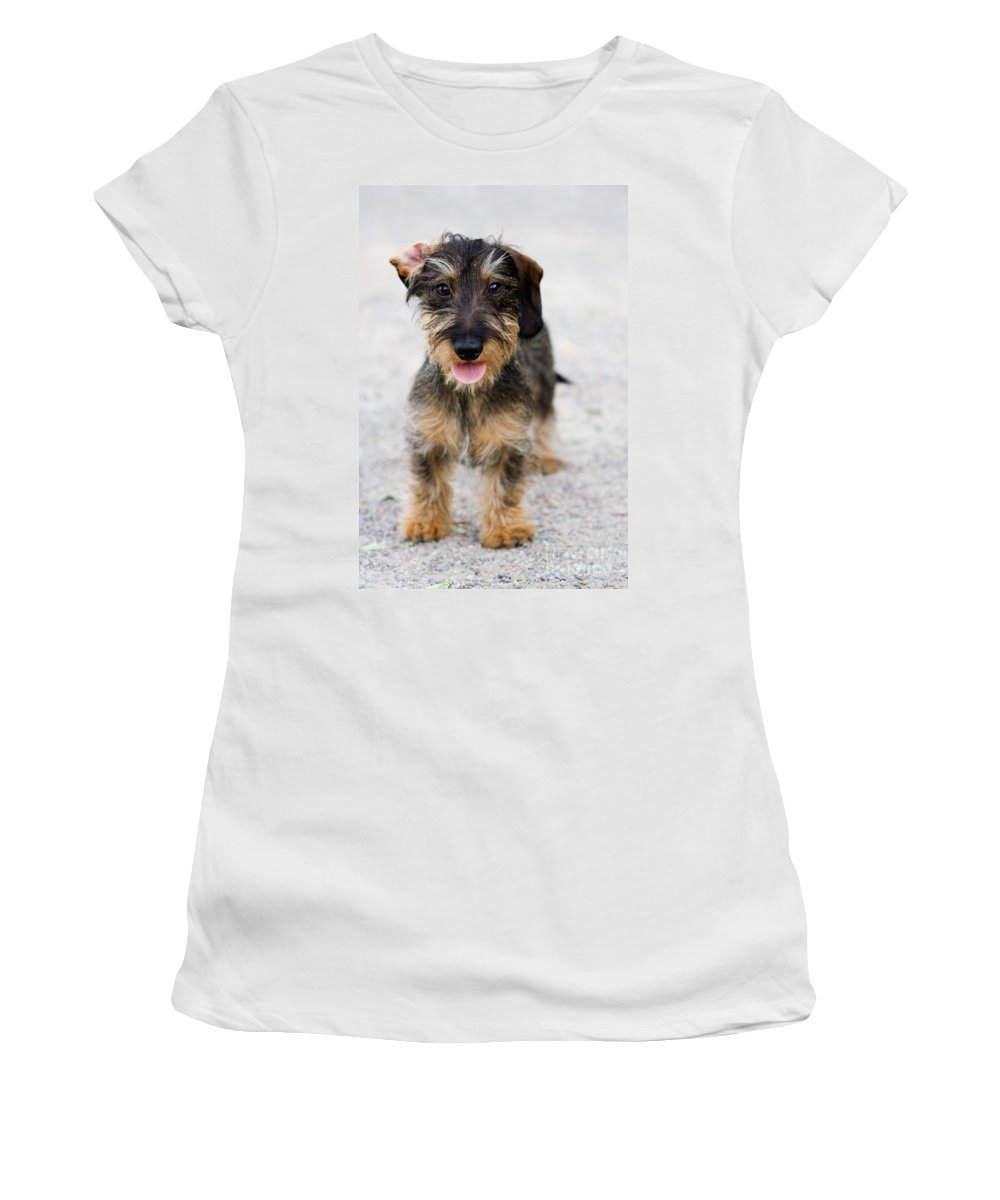 Dog Women's T-Shirt featuring the photograph Dog by Kati Finell