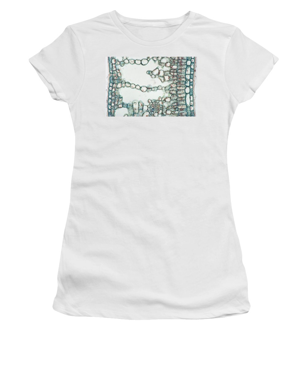 Leaf Women's T-Shirt featuring the photograph Holly Leaf Palisade Cells by M. I. Walker