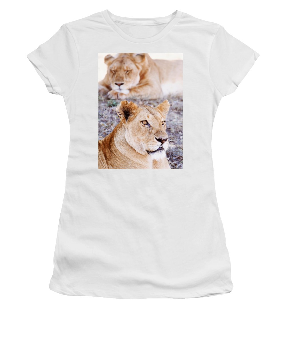 Wildlife Women's T-Shirt (Athletic Fit) featuring the photograph Lionesses Lying In Shade In Maasai Mara by Axiom Photographic